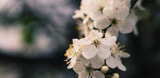 afbeelding van bloemen bij een uitvaart